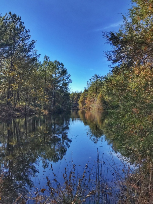 A lake at Magnolia Branch Wildlife Reserve