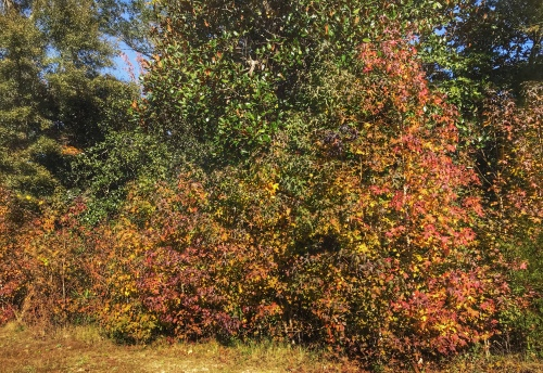 Fall color: Yellow and redish leaves