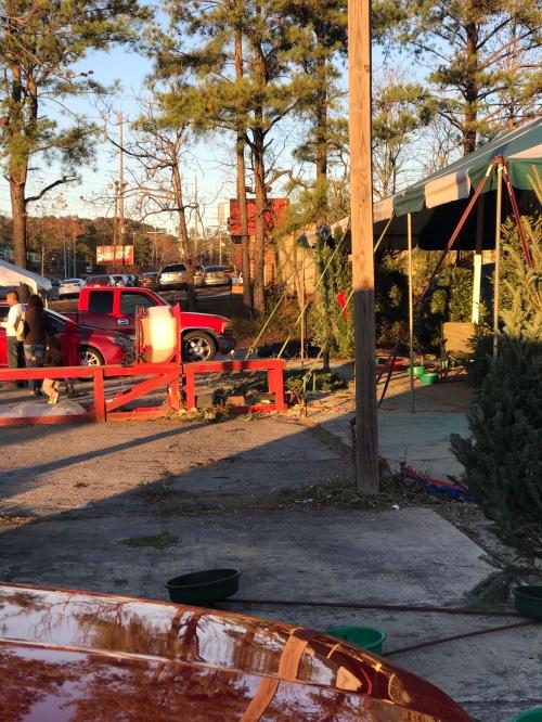 Christmas tree store